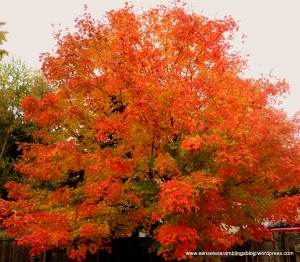 Autumn is: a burst of glorious color