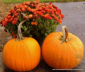 Autumn is: mums and pumpkins