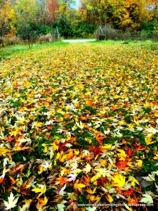 Autumn is: a pavement of gold