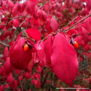 Autumn is: vivid reds