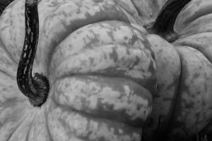 pumpkin-201077_1280